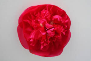 Brand New Flower Making Courses! London Embroidery School